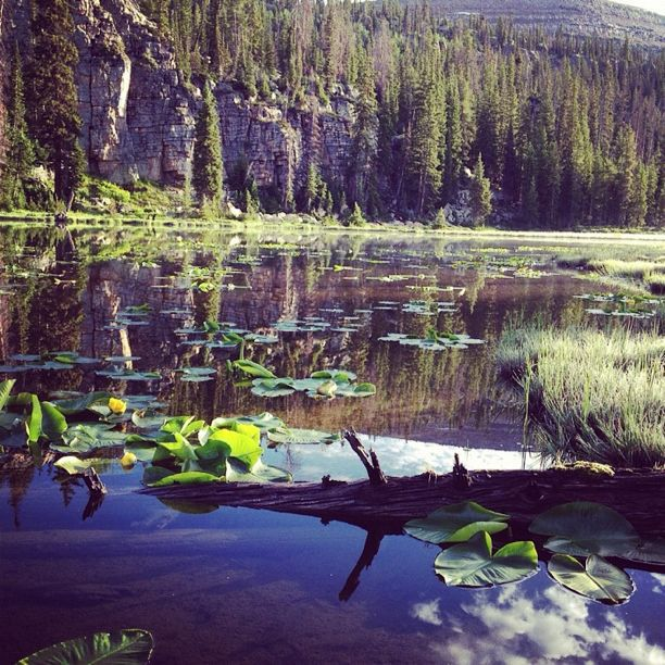waterlilies uintas instagram lake