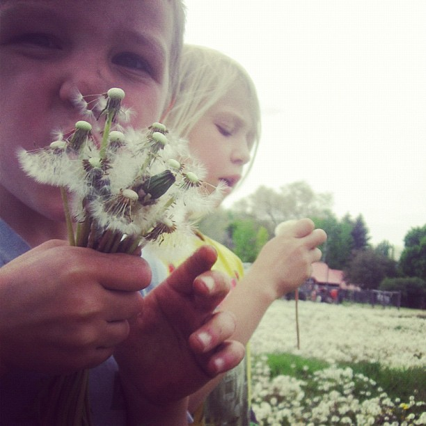 little boy blowing dandelion seeds instagram