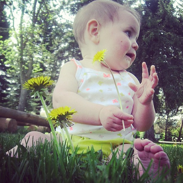 baby girl sitting in front of dandelions instagram