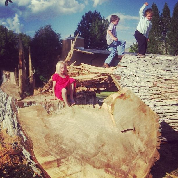 kids climbing fallen tree instagram