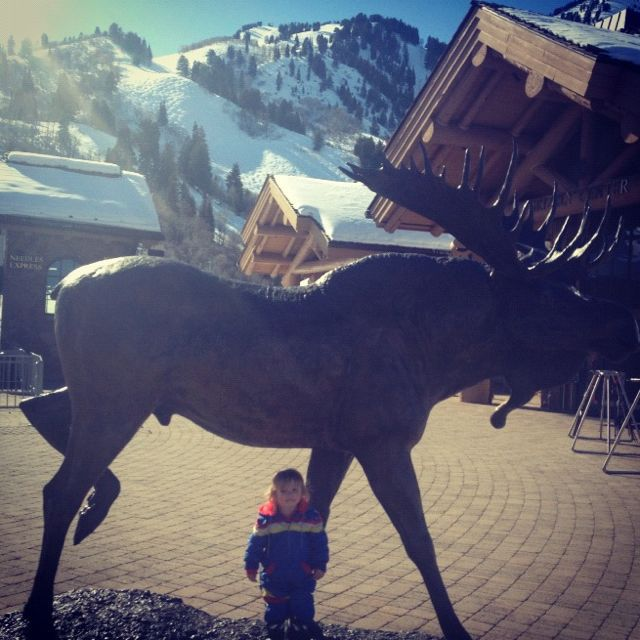 little boy moose sculpture instagram