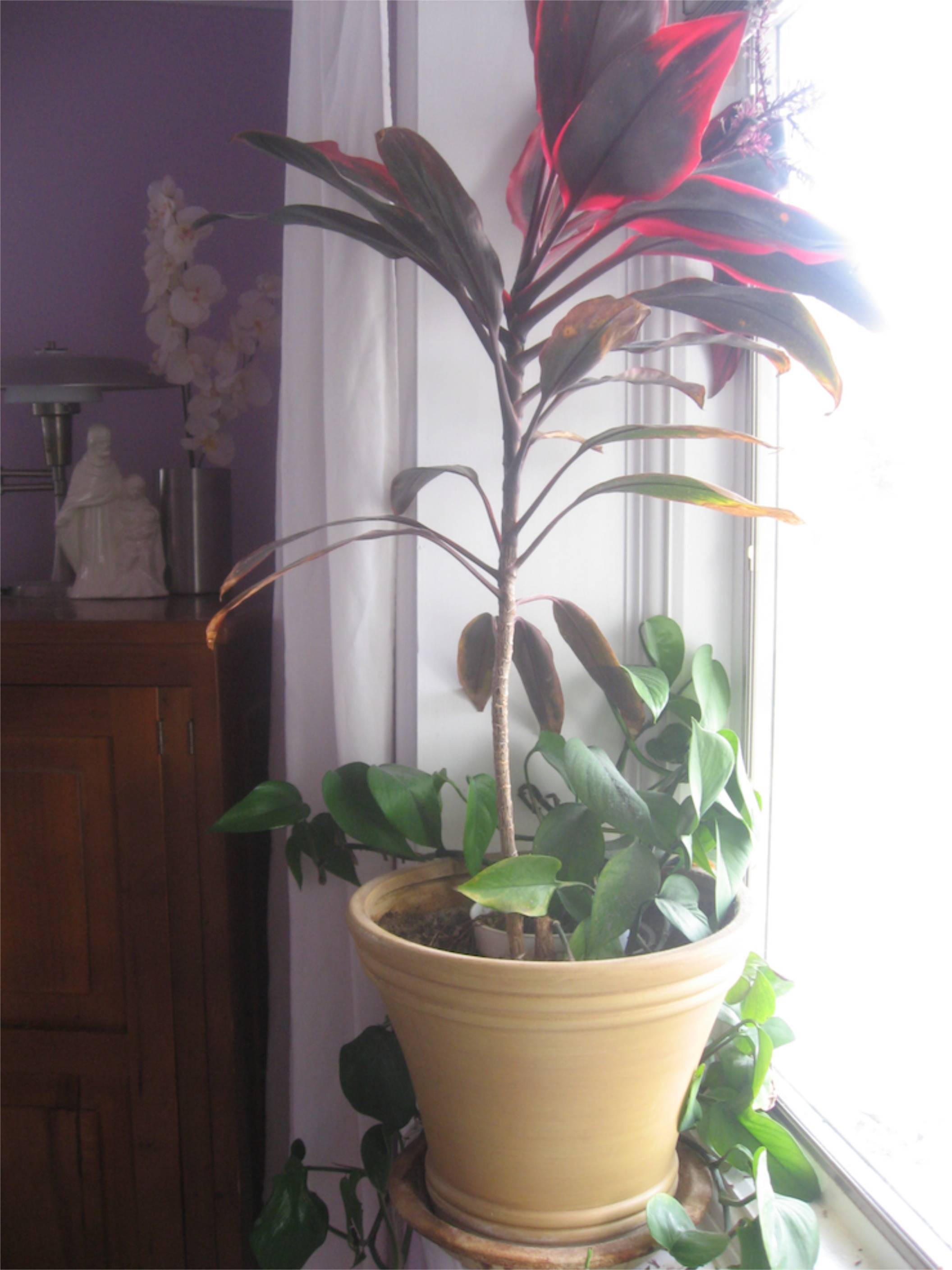 purple living room plant windowsill