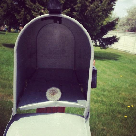 dandelion mailbox instagram
